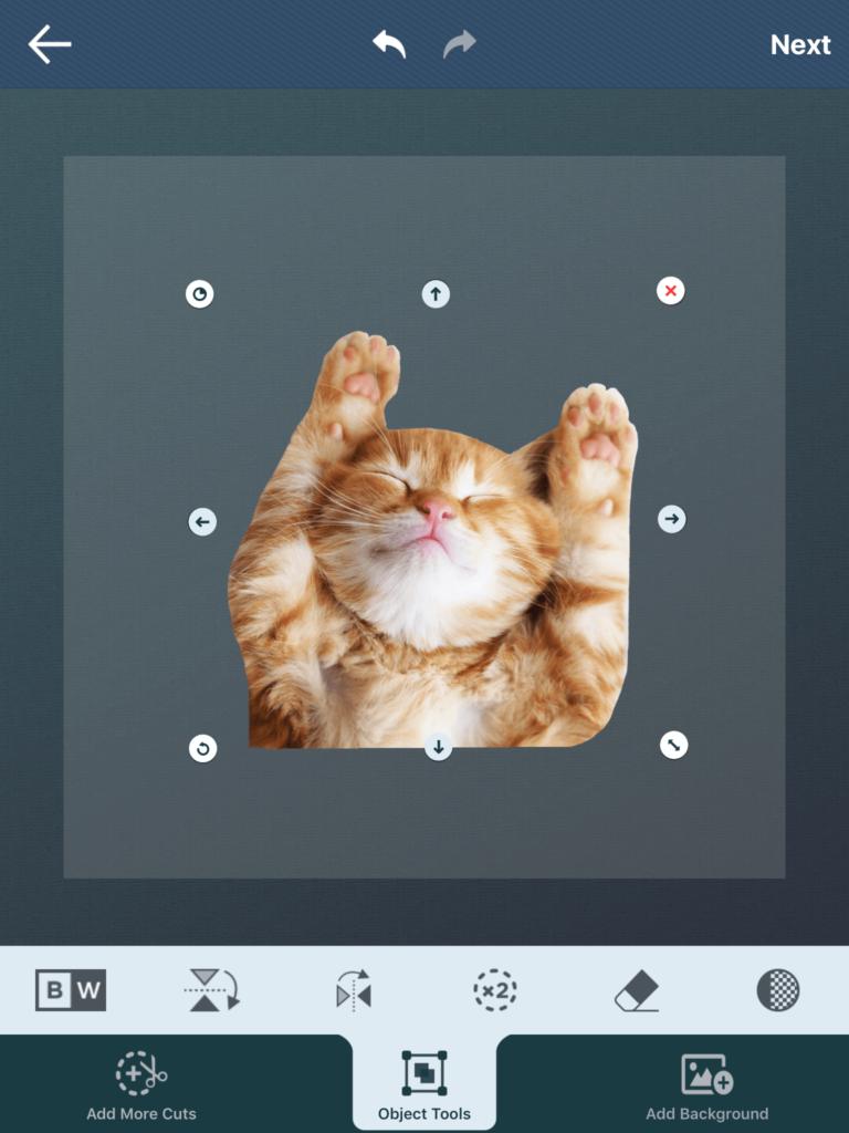 Cut-Paste-Kitten-Transparent-Background