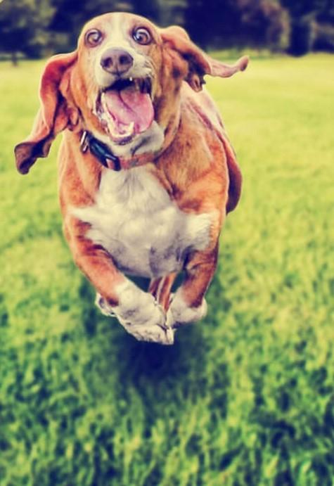 dog-photo-funny